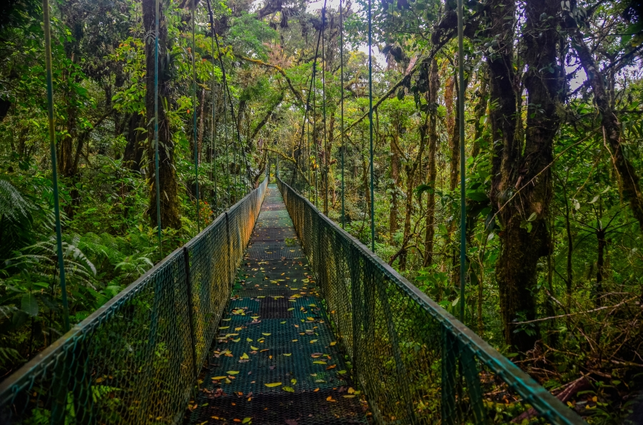 Monteverde Cloud Forest, Costa Rica • © Hobbit Hill Photography
