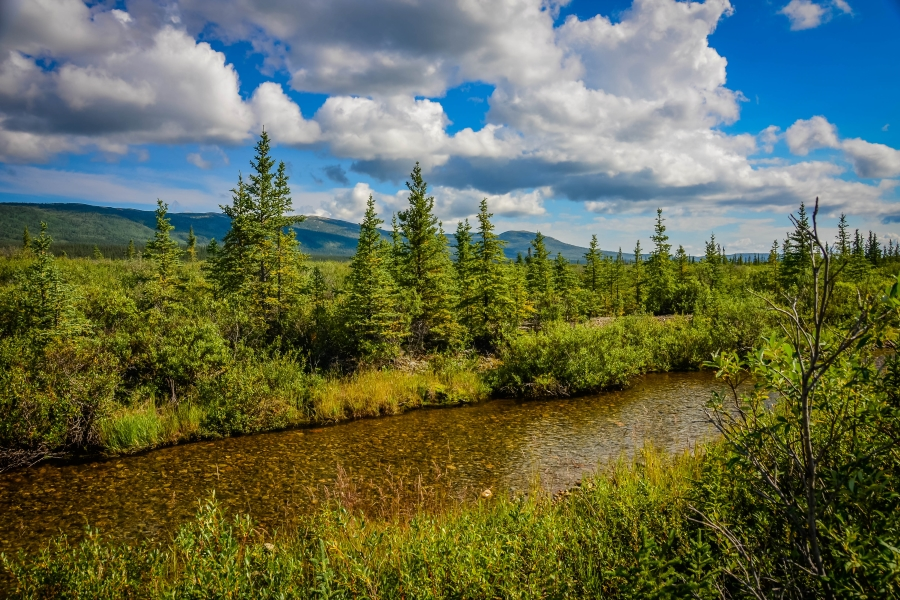Denali NP • © Hobbit Hill Photography