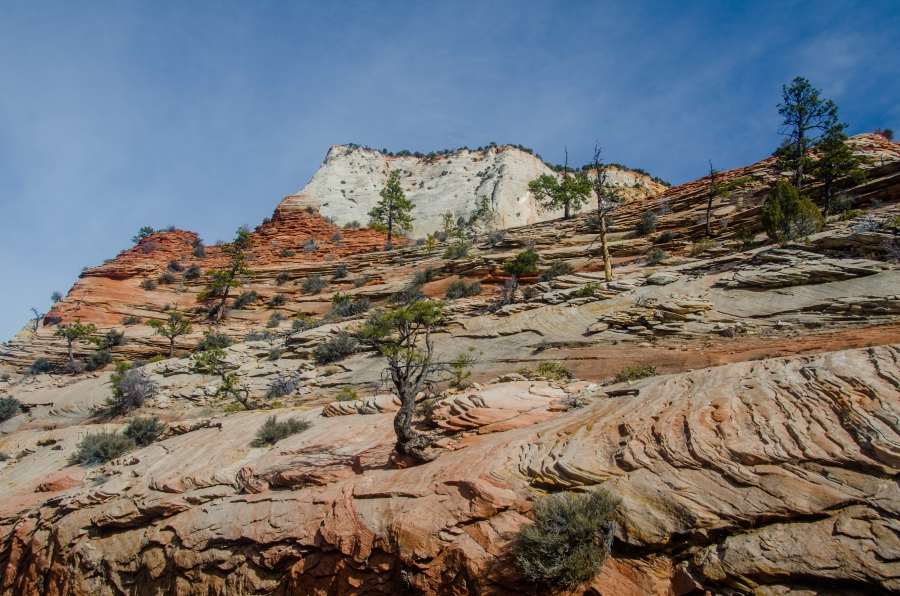 Zion NP • © Hobbit Hill Photography